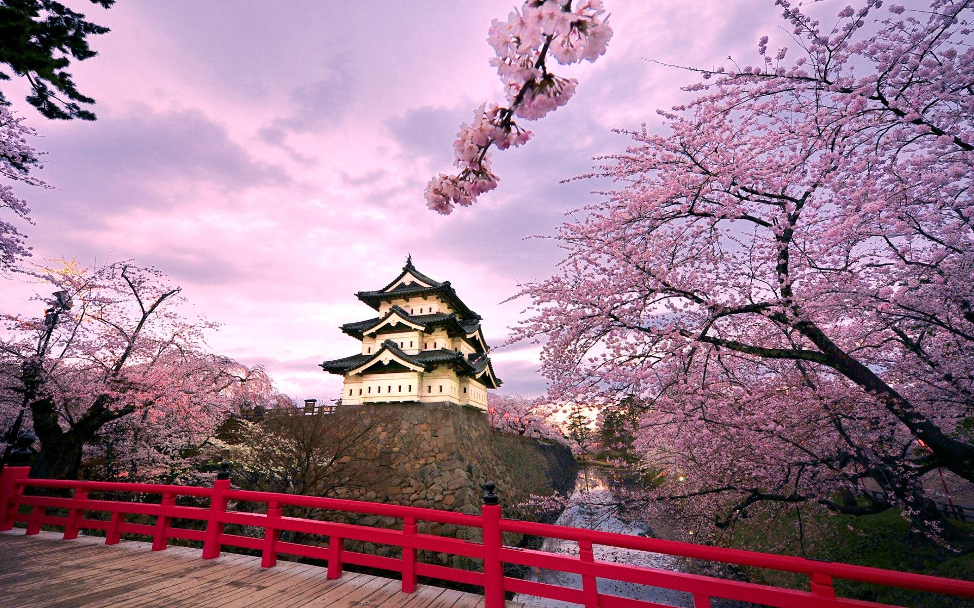 Japan foto: Lyserødt omkring Hirosaki borgen