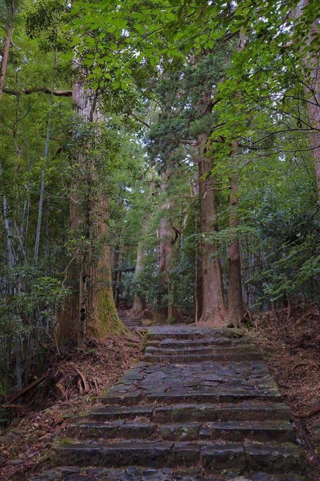 Skov i Japan
