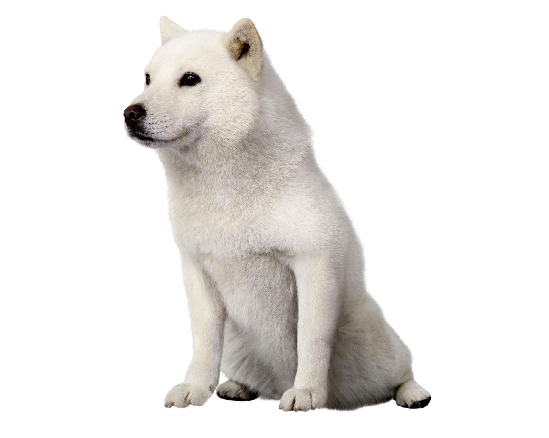Ikonisk hund fra SoftBank-reklamer dør i en alder af 16